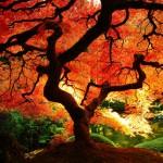 fall_1