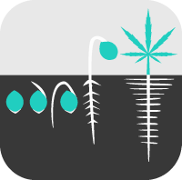 Cannabis Producers
